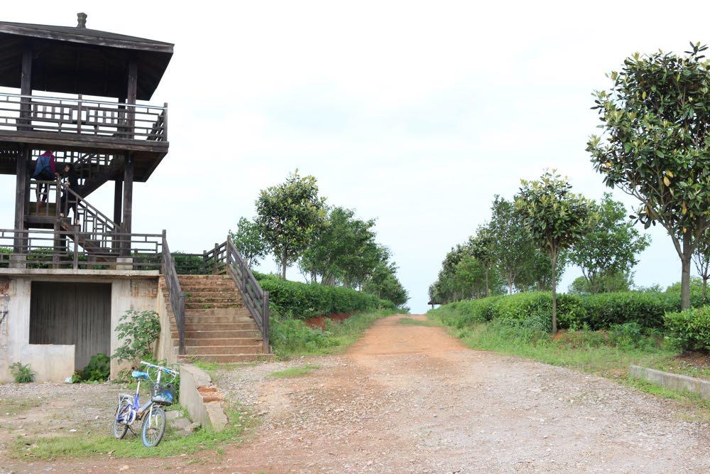 příjezdová cesta k čajové plantáži